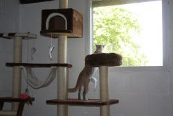 Cat perching up high in the boarding cattery