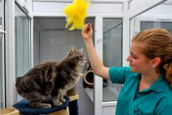 Cat activities at the Boarding Cattery
