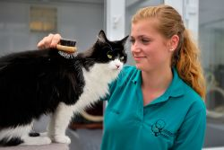 Cat grooming in the boarding cattery