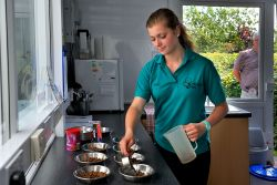 Nutrition in the boarding cattery
